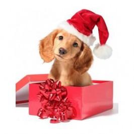 Offrir un chiot ou<br />  un chien à Noël