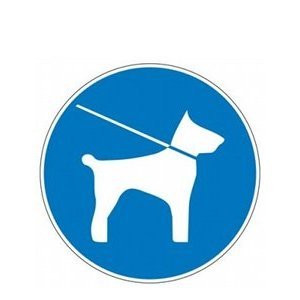 Comment promener son chien sans laisse ?