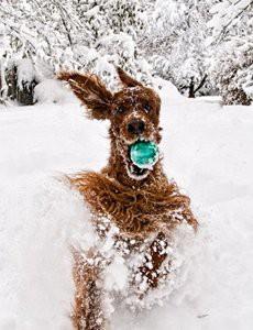 proteger-chien-neige