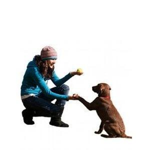 race de chien facile à dresser