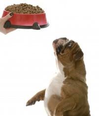 chien souffre modifie alimentation