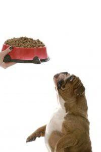bonnes r solutions pour votre chien dresser son comment dresser son chien. Black Bedroom Furniture Sets. Home Design Ideas