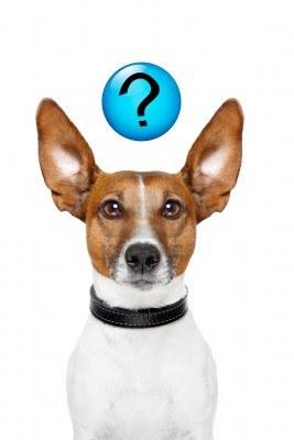 test-deduction-dresser-son-chien
