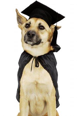test-intelligence-chien