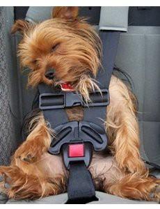 transporter-chien-voiture