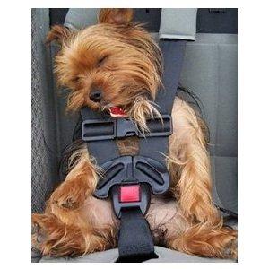 Comment transporter son chien en voiture ?