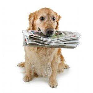 blog-actualite-chiot-chien
