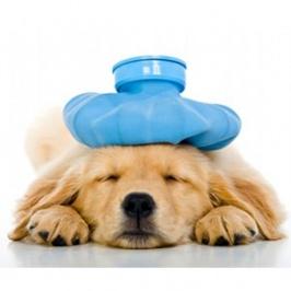Signes et symptômes que votre chien souffre