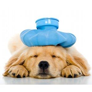 signes symptomes chien souffre