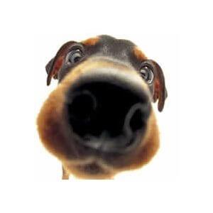 comment-sent-un-chien