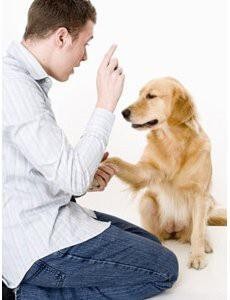 methode-dresser-son-chien-15-minutes-par-jour-pdf