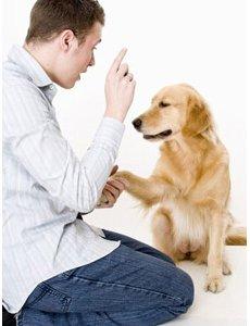 chien droitier gaucher lateralisation