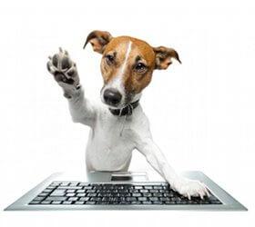 redacteur dresser son chien