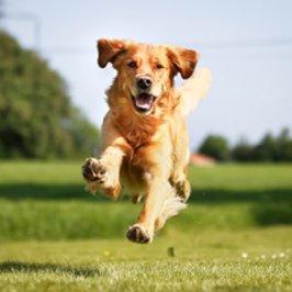 Apprendre le rappel à son chien : 3 jeux pour apprendre en s'amusant !