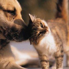 Cohabitation entre chien et chat<br /> les secrets pour une bonne entente