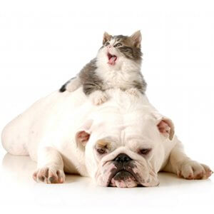 cohabitation-entre-un-chien-chat