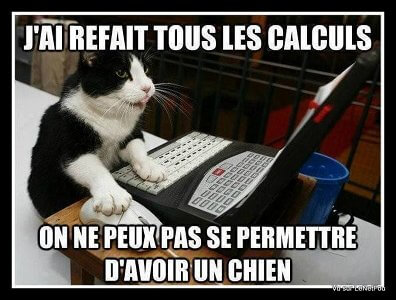 budget pour adopter chien