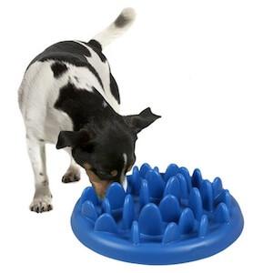 comment apprendre a son chien a manger doucement