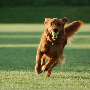 Apprendre le rappel à son chien : 3 jeux pour s'entraîner