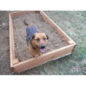 bac-pour-chien-qui-creuse