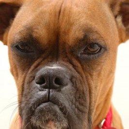 5 choses qui énervent<br /> profondément votre chien