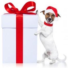 Bienvenue au Noël de mes chiens !