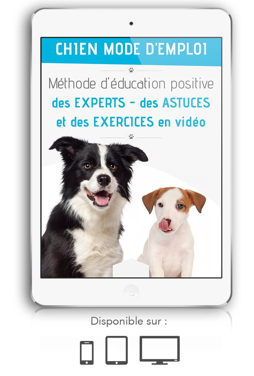 chien mode d emploi formation video gratuit torrent