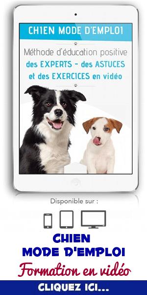 Formation chien mode d'emploi en vidéo