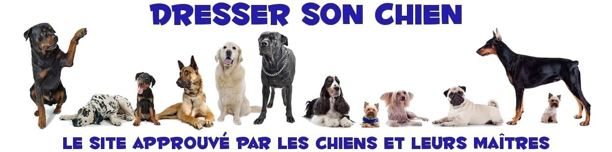 Dresser-son-chien.com – Comment dresser son chien ?