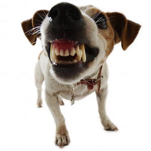 punitions-chien