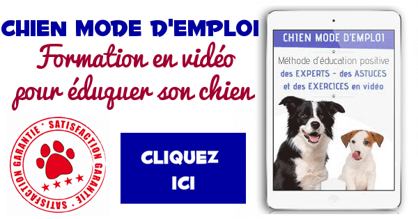 formation-video-chien-mode-emploi