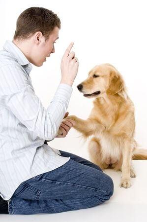 dresser-votre-chien