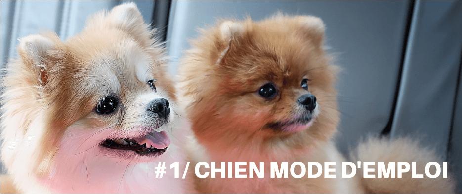 telecharger chien mode emploi gratuit