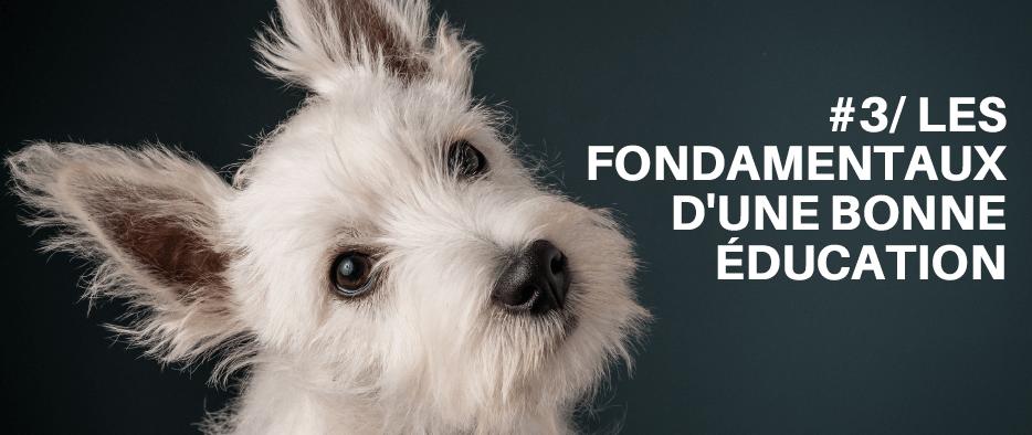 chien mode demploi telecharger formation gratuit