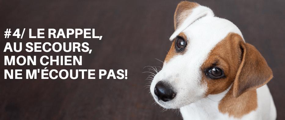 chien mode demploi module gratuit