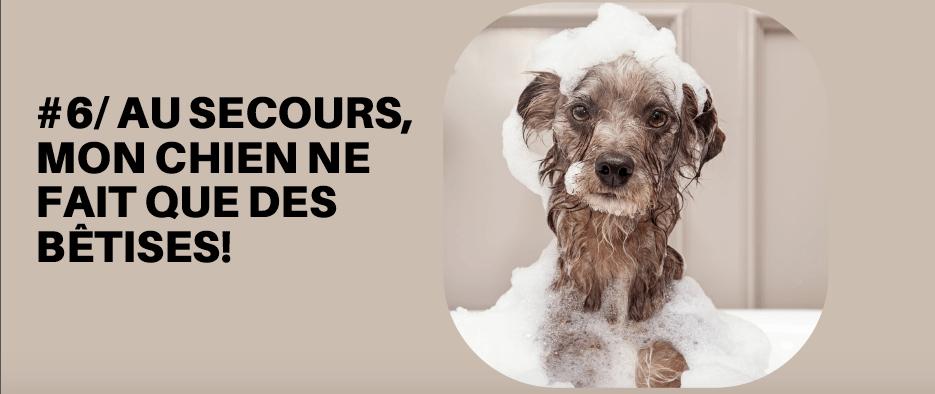 Chien mode d 39 emploi la formation vid o pour duquer - Canisette pour chien ...